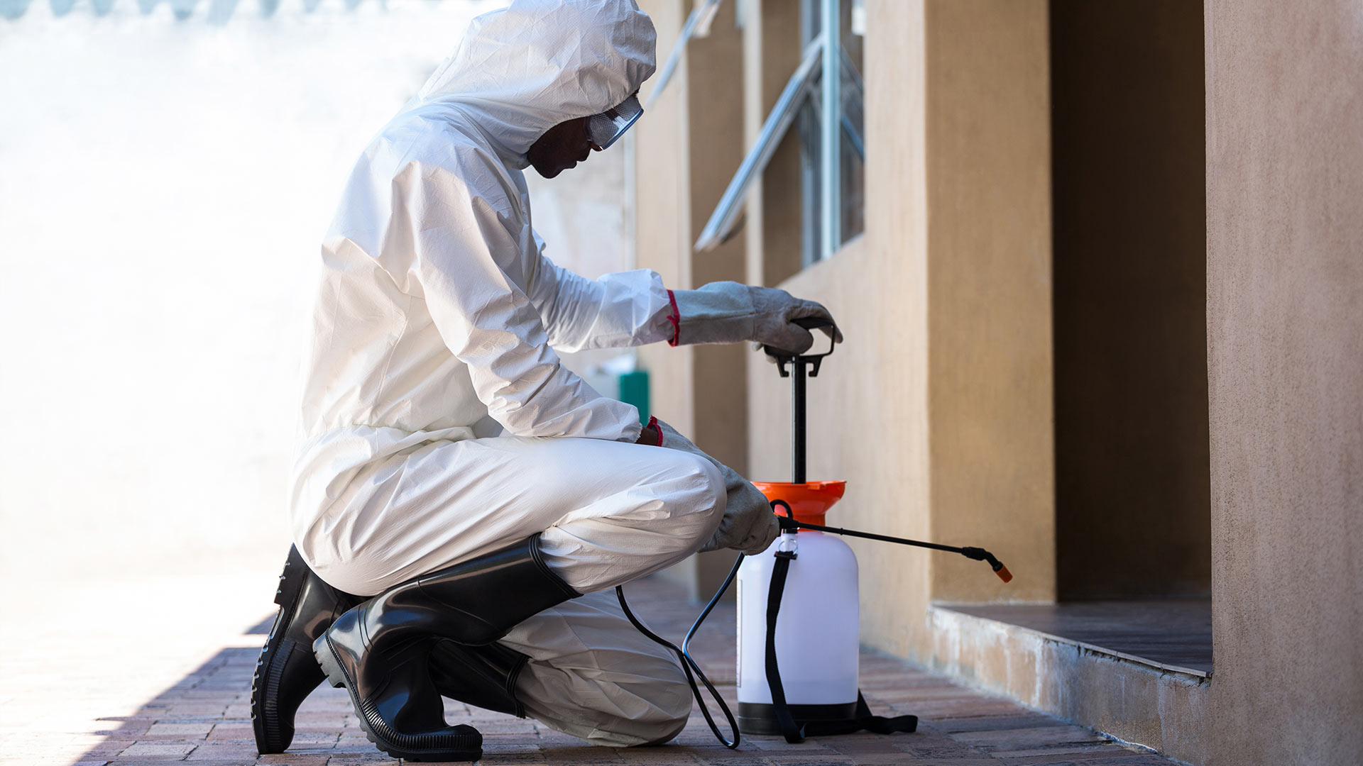 Pest Extermination Can Secure Your Home